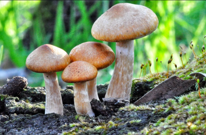 Could You Obtain Top Utilizing Magic mushrooms canada To Increase Your Mental Health?