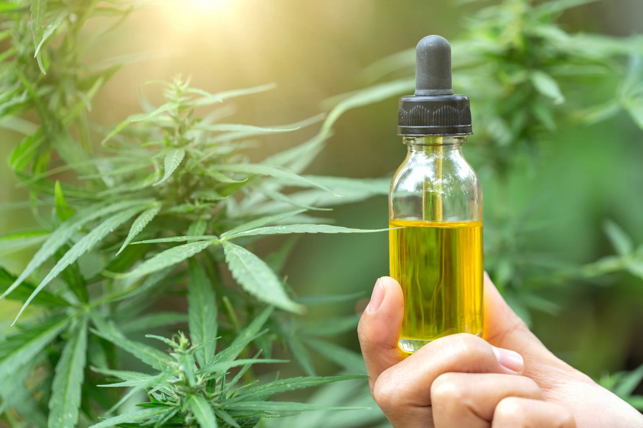 Get Out Of Depression With CBD Oil Canada